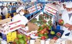 Envíos de agroexportaciones alcanzarían US$4.400 mlls. al 2020