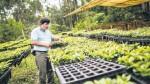 Pasco: hay más de 200 cafetaleros estafados con semillas falsas - Noticias de juan leon almenara