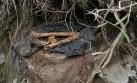 Pangoa: estiman que hay restos de 200 personas en fosas