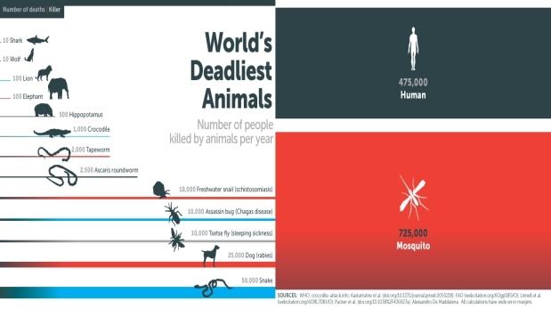 ¿Cuál es el animal que causa más muertes en el mundo?
