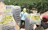 Perú será sede del congreso mundial de frutas y hortalizas
