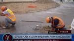 Palmeras de Chincha: se iniciaron las obras en Plaza de Armas - Noticias de el talan