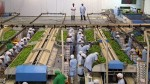 Mincetur: exportaciones peruanas cayeron 15,2% a noviembre - Noticias de magali rojas