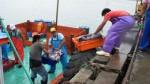 SNI pide mayor estudio de la pota antes de ampliar su pesca - Noticias de pesca de anchoveta