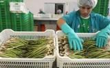Grupo brasileño comprará frutas y hortalizas de Trujillo e Ica