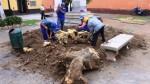 Trujillo: talan árboles con más de 70 años de antigüedad - Noticias de el talan