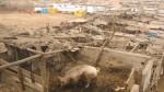 SJM: declaran en emergencia Nueva Rinconada en Pamplona Alta - Noticias de adolfo ocampo vargas