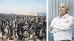 El guardaislas que protegió a las aves y a su guano por 34 años - Noticias de san juan de marcona