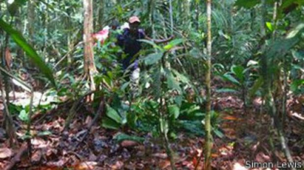 Descubren en Congo un tesoro natural del tamaño de Inglaterra