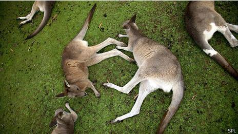 ¿Es verdad que los animales se drogan y emborrachan?