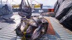 Produce: atún podría impulsar inversiones en el sur del país - Noticias de inversion extranjera directa