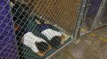 Más de 60 niños peruanos ingresaron ilegalmente a EE.UU. - Noticias de