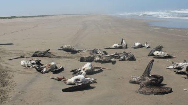 muerte-pelicanos