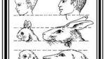 ¿Por qué nos enternecen tanto los bebes mamíferos? - Noticias de las mujeres de negro