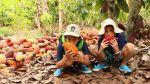 Tarapoto para niños: Ellos también pueden disfrutar de la selva - Noticias de rana plaza