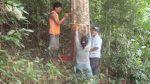 El caucho renace en la selva y desplaza a la coca - Noticias de juan leon almenara