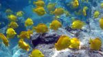 EE.UU. aprueba técnica para exploración petrolera por sonido - Noticias de laboratorio submarino