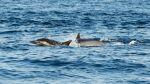 Empezó la temporada de avistamiento de ballenas jorobadas - Noticias de lobos marinos