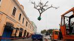 Congreso de la República: árboles rescatados - Noticias de revista somos