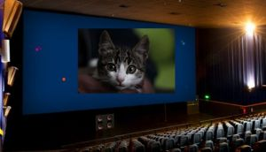 Cine respondió a usuario que denunció caída de gato en sala