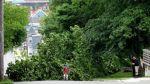 Los árboles salvan la vida de miles de personas al año - Noticias de contaminación ambiental