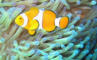 Triste destino: la Gran Barrera de Coral sigue en peligro
