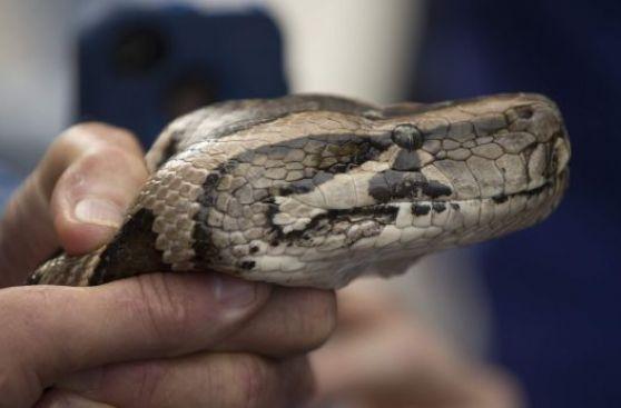 Una cafetería donde puedes acariciar reptiles