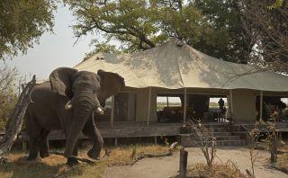 En este campamento tus invitados de honor serán los elefantes