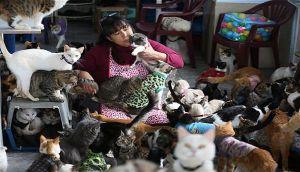 La mujer que cría 175 gatos con leucemia necesita ayuda