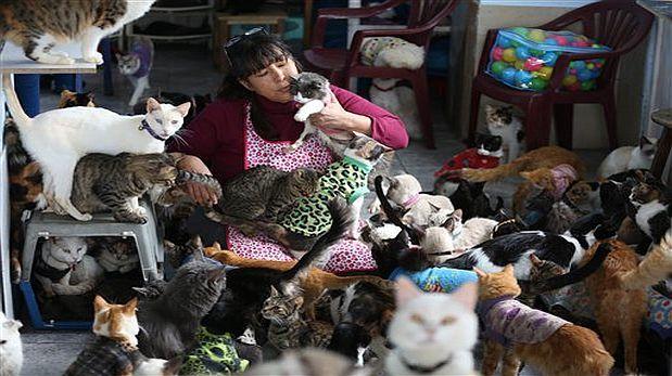 Video de las mujeres que amamantan a los gatos