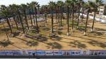 Reanudan obras en plaza de Chincha: reubicarán 12 palmeras - Noticias de chincha