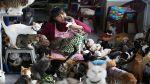 La mujer que cría 175 gatos con leucemia necesita ayuda - Noticias de revista para adultos