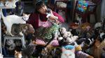 El milagro de vivir cuidando a 175 gatos que sufren leucemia - Noticias de