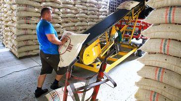 Producción nacional de café podría caer hasta 30% este año