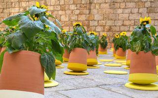 Esta maceta ayudará a que tus plantas crezcan sanas y fuertes