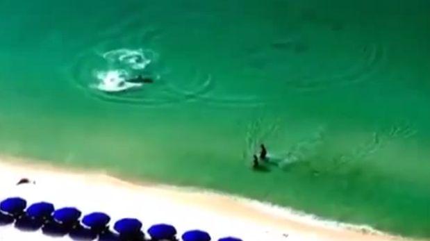 Alerta desde un edificio salva a bañistas de un gran tiburón