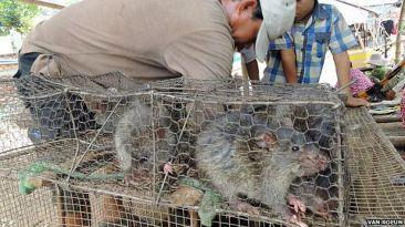 El país donde la carne de rata es un negocio de exportación