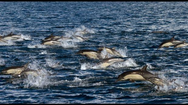 Japón inicia temporada de caza de delfines pese a críticas