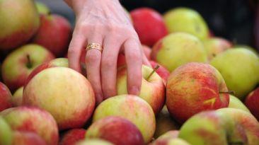 En Estados Unidos mejora dieta, pero no entre los pobres