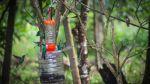 Rutas por descubrir: Un recorrido por los bosques de niebla - Noticias de bagua grande