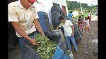 Vraem: Excluyen a Devida de mesa que verá cultivos alternativos - Noticias de
