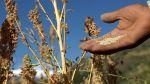 Perú es el primer productor mundial de quinua - Noticias de manuel garay