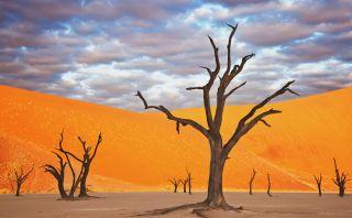 El Dead Vlei:Este lugar en Namibia parece sacado de una pintura
