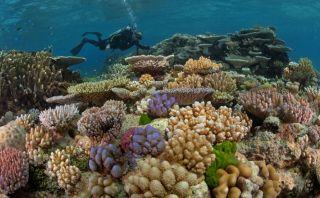 [Fotos] Cinco lugares imperdibles para los amantes del buceo