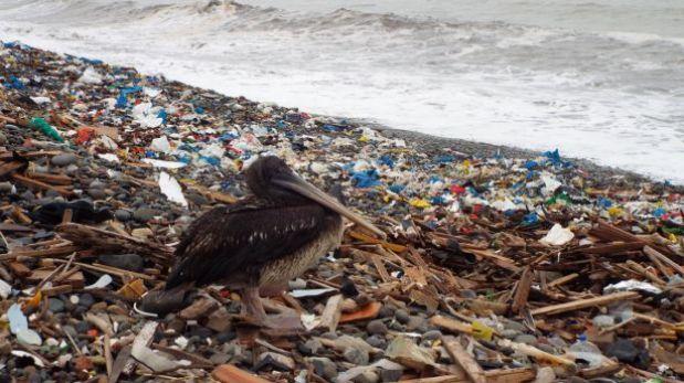 Realizan campaña de limpieza en playas de todo el país