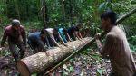 La tala ilegal y su preocupante panorama en la Amazonía [Fotos] - Noticias de loreto