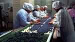 Exportaciones de arándanos frescos a Canadá llegan a US$788 mil - Noticias de sector comercio