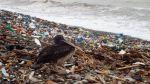 Realizan campaña de limpieza en playas de todo el país - Noticias de contaminación