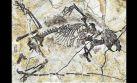 Nuevos fósiles del Jurásico explican evolución de los mamíferos