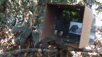 Pequeños monos aprenden viendo un video tutorial [VIDEO] - Noticias de youtube